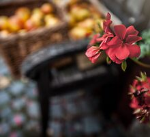 Autumn Apples and Blossoms by Boston Thek Imagery