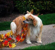 Hudson In October by jodi payne