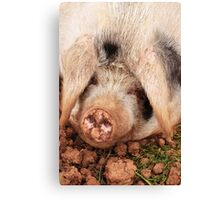 Pig tired! Canvas Print