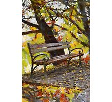 bench in park Photographic Print