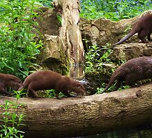A row of Otters!! by Jacqueline Longhurst