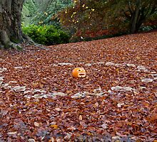 Pumpkin in Fairy Ring by Sue Robinson