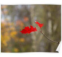 Red Oak Leaves Poster