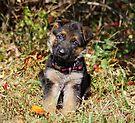 Pretty Puppy by Sandy Keeton