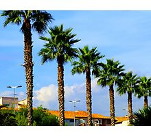 The Palm Trees Of Antibes Photographic Print
