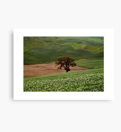 Solitario Canvas Print
