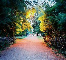 sentiero illuminato by marcellom