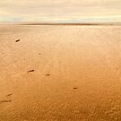 Morecambe Bay by Steve