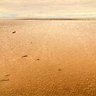 Morecambe Bay by Steve