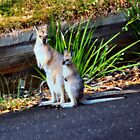 Wallaby and Joey by Sandy1949
