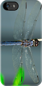 Dragonfly by TinaGraphics