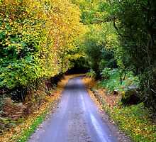 The autumn road by k-s-photography