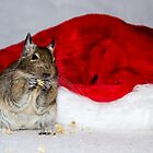 Degu Claus by lmaiphotography