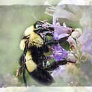Bumble Bee Beauty by Susan Werby