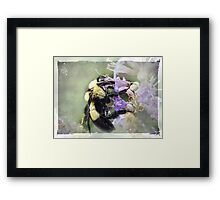 Bumble Bee Beauty Framed Print