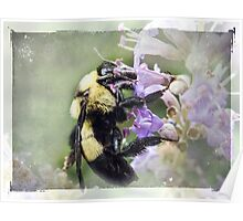 Bumble Bee Beauty Poster