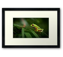 Costa Rican Red Eye Tree Frog Framed Print