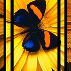 Butterfly on a Yellow Flower by TinaGraphics