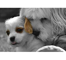 High lighted the cuteness Photographic Print