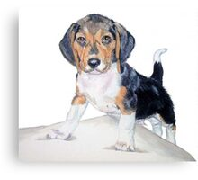 Bagel the Beagle Canvas Print