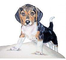 Bagel the Beagle Photographic Print