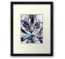 Purple eyes Cat Framed Print