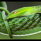 Vine snake by AngiNelson