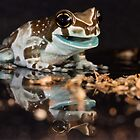 hungry milk frog by Angi Wallace