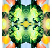 Poppie kaleidoscope #1 Photographic Print