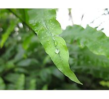 Leaf With Water Droplets Photographic Print