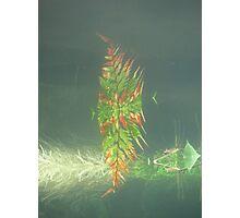 Underwater Fern Photographic Print