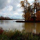 October  Afternoon by Joanne  Bradley