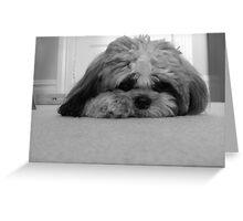 Shadow the Dog Greeting Card