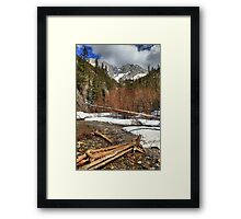 Trees and logs Framed Print