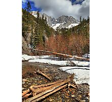 Trees and logs Photographic Print