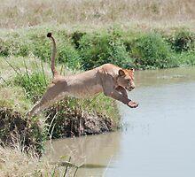 Jumping Lioness 2 by Bernie Rosser