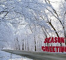 Season's Greetings - Archer Road by Adam Bykowski