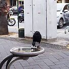 Crow 31 10 12 Look At You by Robert Phillips