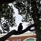 Crow 31 10 12 Look At You Two by Robert Phillips