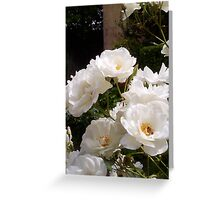 White Roses And A Bee 01 11 12 Greeting Card
