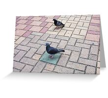 Pigeon One 02 11 12 Greeting Card