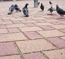 Pigeon Three 02 11 12 by Robert Phillips