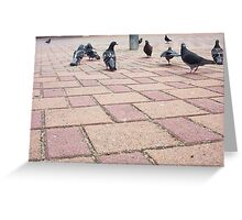 Pigeon Three 02 11 12 Greeting Card