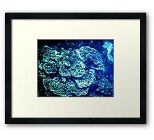Coral Framed Print