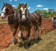 0979 We plough the fields by DavidsArt