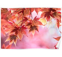 Autumn pinks Poster