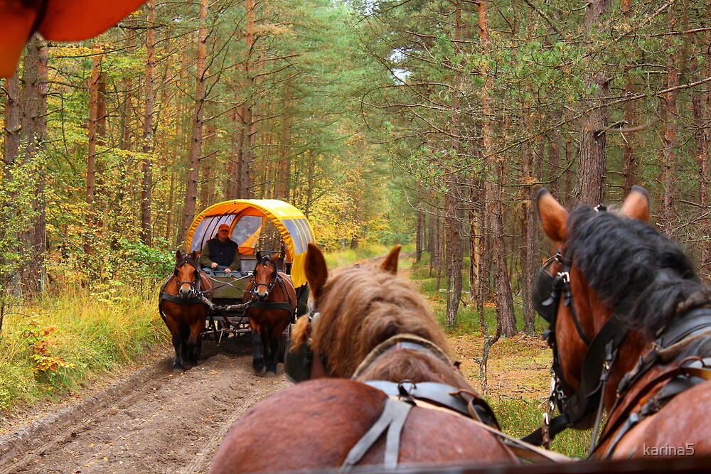 Traffic Jam in the Forest by karina5