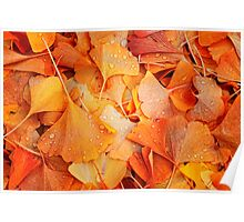 Ginkgo Fall Poster