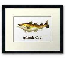 Atlantic Cod Painting Framed Print