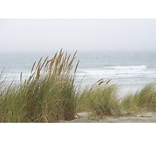 Wind in the Grasses Photographic Print